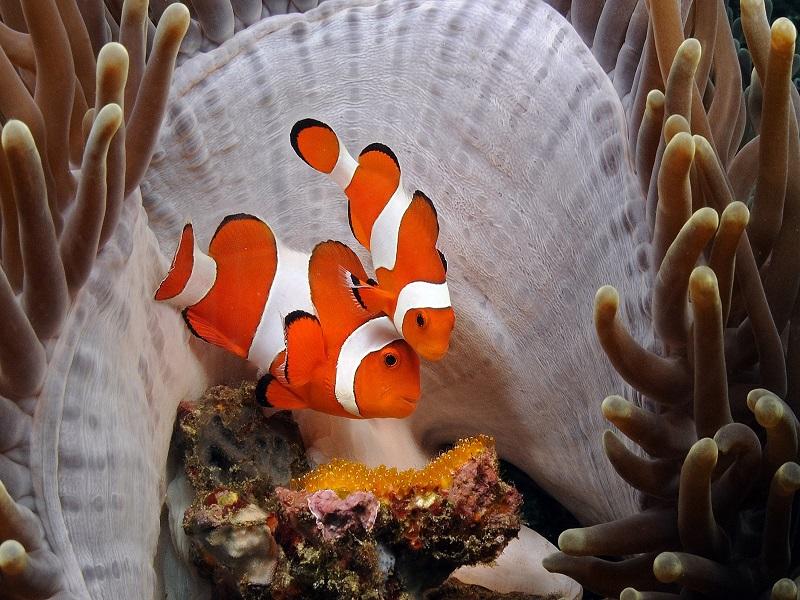 diving_bali-indonesia_crystal_divers (7)