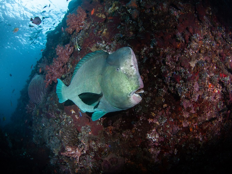 padi_natrualist_crystal_divers_bali_indonesia