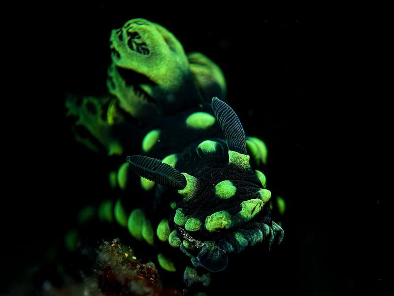 padi_night_diver_crystal_divers_bali_indonesia