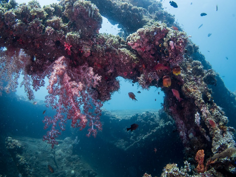 padi_wreck speciality_scuba_div ing_crystal_divers_bali_indonesia